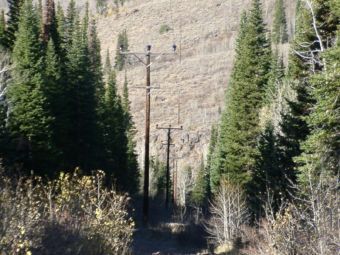 Hillside with trees and power lines in Idaho