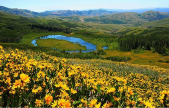 A landscape of yellow flowers and hills in Jarbidge, Utah