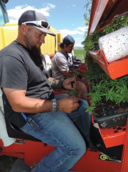Ches Burmester and Cristian Martinez place hemp shoots in planter.