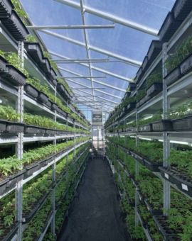 The 1,600-squarefoot greenhouse provided room to grow 260,000 industrial hemp seedlings.