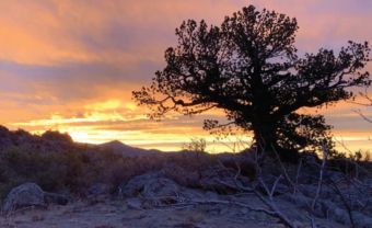 Stellar sunrises reward hunters on Winecup Gamble Ranch. Photo by Jason Molsbee