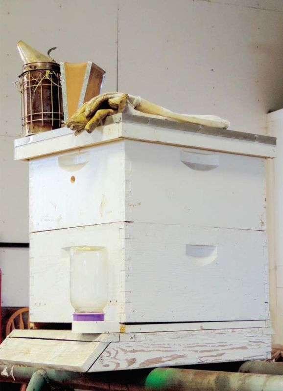 Zane's tools: a hive, long gloves and a smoker